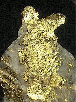 Gold :: Locality: Red Lake Mine (Goldcorp Mine...