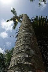 Palm tree at Fairchild Gardens