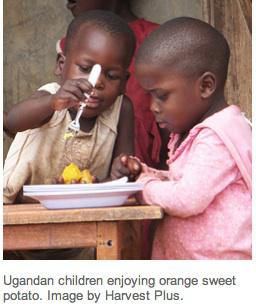 solution to hunger in america The following is a list of solutions to world hunger compiled from articles by  this often happens in africa, latin america, asia, oceania and eastern europe land grabbing leads to the land's natives having nowhere to live and grow their own crops 2 stop eating meat.