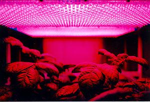 LED panel light source used in an experiment o...