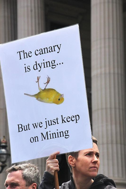 The Canary is dying...But we just keep on mini...