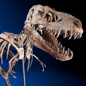 Downside risk in dinosaur bones? The Mongolians had a beef about this million-dollar T. rex cousin. Photo: Heritage Auctions (ha.com)