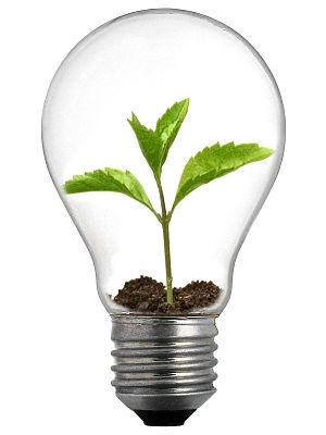 English: A sprout in a lightbulb.