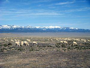 English: View of Snake Valley. Sheep in foregr...