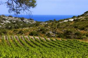 Visit France's Languedoc For Wines Of Great Value