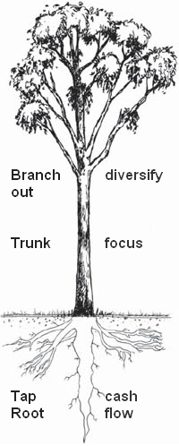 5 Things a Business can Learn from a Tree