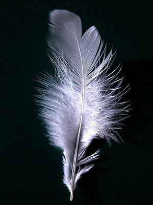 English: A single white feather closeup. Deuts...