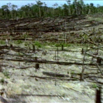 Neotropical deforestation © M. C. Tobias