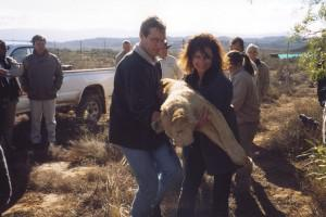 Linda Tucker and Jason Turner carry tranquilized cub to freedom © WTL