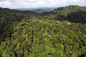 A view of the forest in French Guyana near Dor...