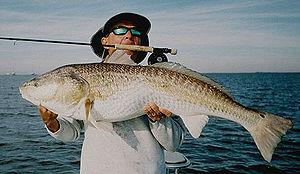 English: Saltwater Fly Fishing Guide Alec Grif...