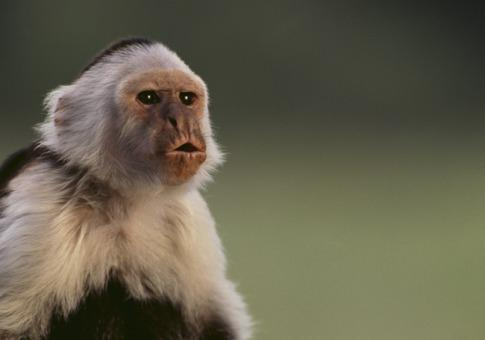 any monkey can beat the market