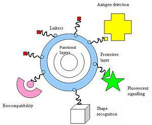 Interactions of nanoparticles with biological ...